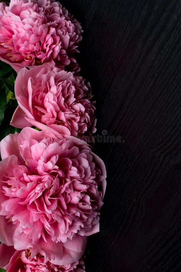 Peonías frescas hermosas en superficie de madera Marco floral con las peonías rosadas en fondo de madera foto de archivo libre de regalías