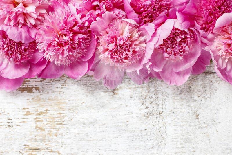 Peonías rosadas imponentes foto de archivo libre de regalías