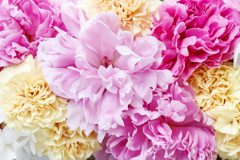 Peonías rosadas imponentes, claveles amarillos y rosas fotos de archivo