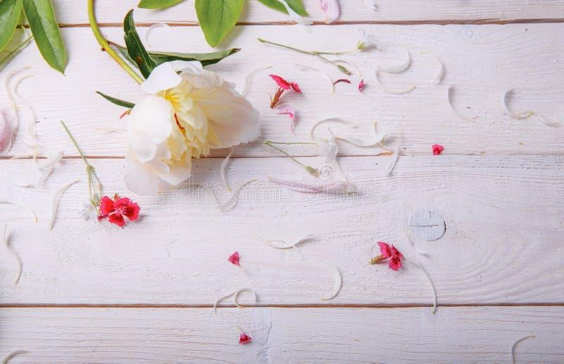 Peonías rosadas imponentes en el fondo de madera rústico blanco Copie el espacio fotografía de archivo libre de regalías