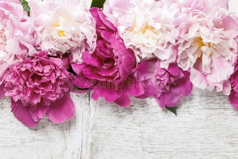 Peonías rosadas imponentes en la madera rústica fotos de archivo
