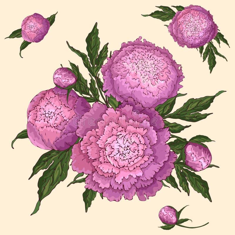 Peon?as del vector Fije de las flores aisladas de la rosado-lila Ramos de flores en un fondo beige Plantilla para la decoración f stock de ilustración