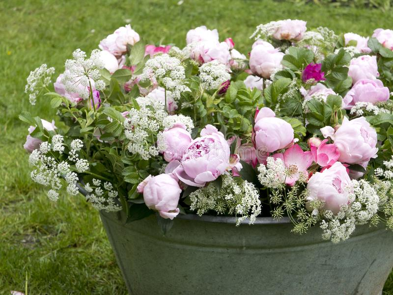 Peonia bukiet w ogródzie fotografia stock