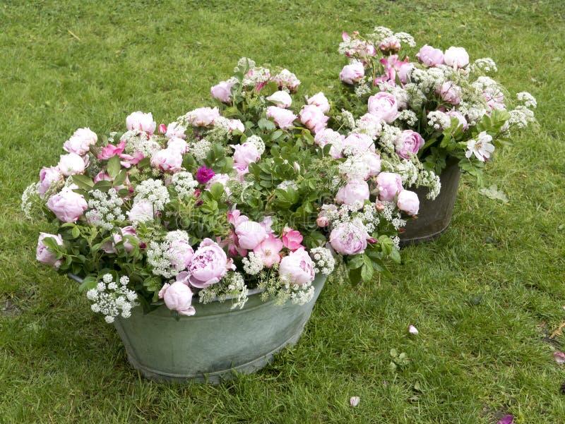 Peonia bukiet w ogródzie zdjęcie stock