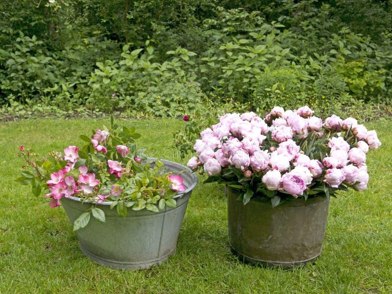 Peonia bukiet w ogródzie obrazy stock