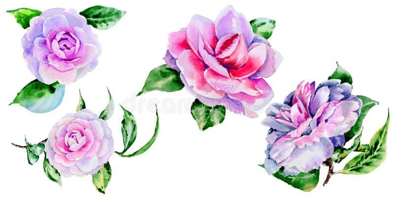 Peonia del Wildflower, fiore di camelia in uno stile dell'acquerello isolato illustrazione di stock