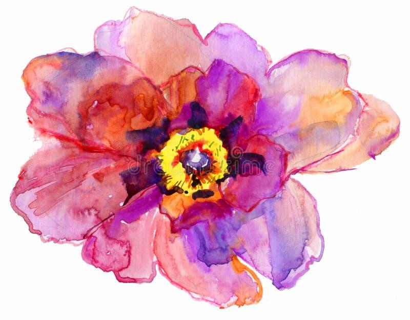 Peonia kwiat ilustracji