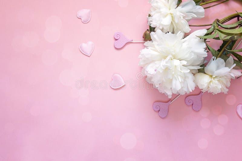 Peonie bianche con i cuori decorativi su un fondo rosa fotografia stock