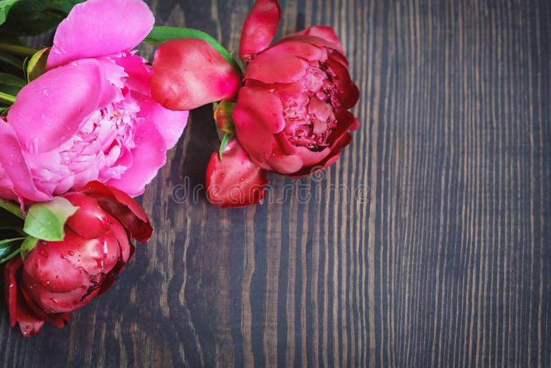 Peonie rosse e rosa su una tavola di legno Bello fondo floreale del fondo… con i fiori variopinti immagini stock libere da diritti