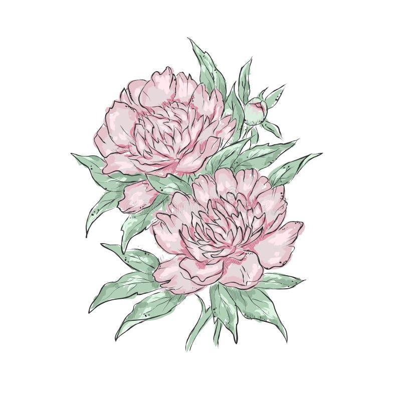 peonies Притяжка руки цветка также вектор иллюстрации притяжки corel иллюстрация штока