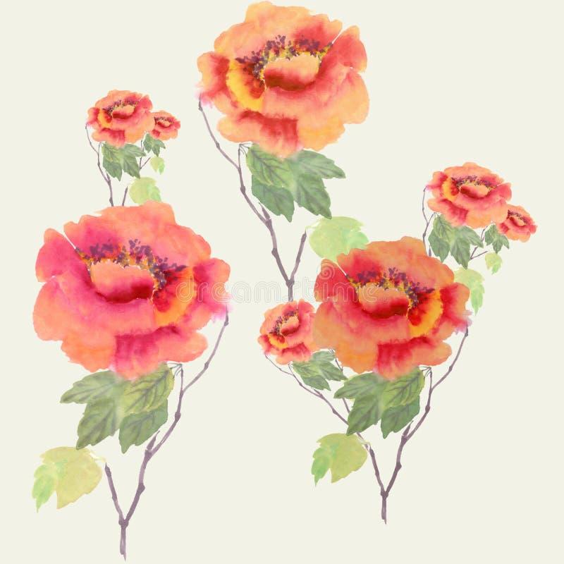 peonies Цветки, бутоны и листья - акварель иллюстрация штока