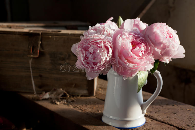 Peonies. Bouquet of pink peonies in vase royalty free stock photos