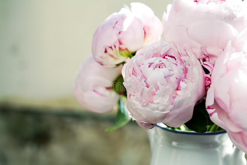 Peonies. Bouquet of pink peonies in vase, toned stock images