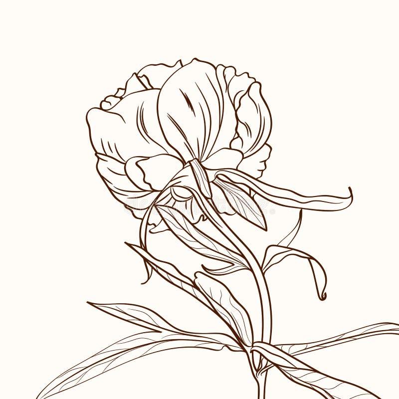 Peonies brown sepia outline on beige background. Spring summer flowers vector illustration. stock illustration