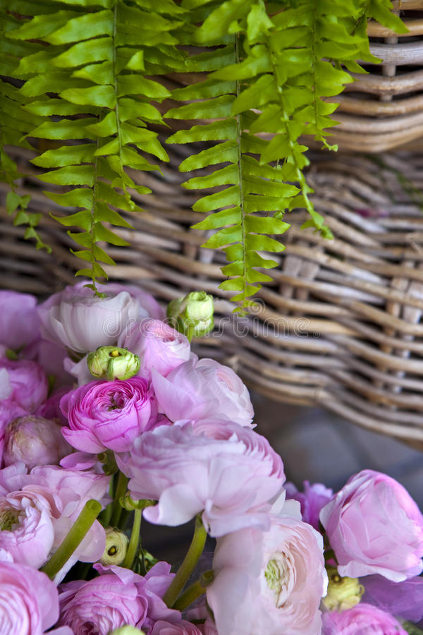 Download Peonies and fern stock image. Image of bunch, green, plant - 24235717