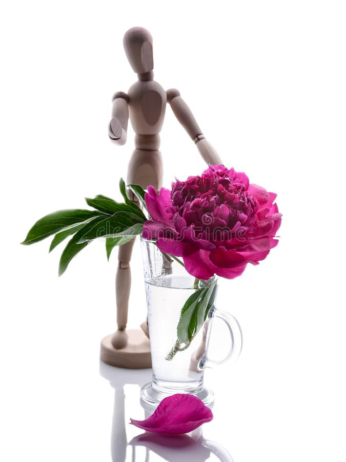 Peonies in a glass vase isolated on white background. Romantic gift. Vertical shot stock photo
