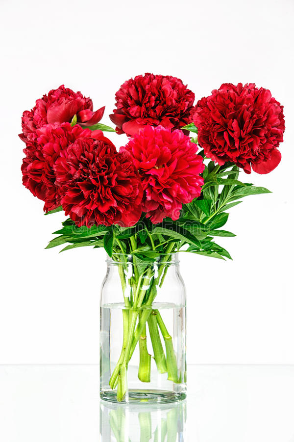 Peonies in a glass vase with water royalty free stock images