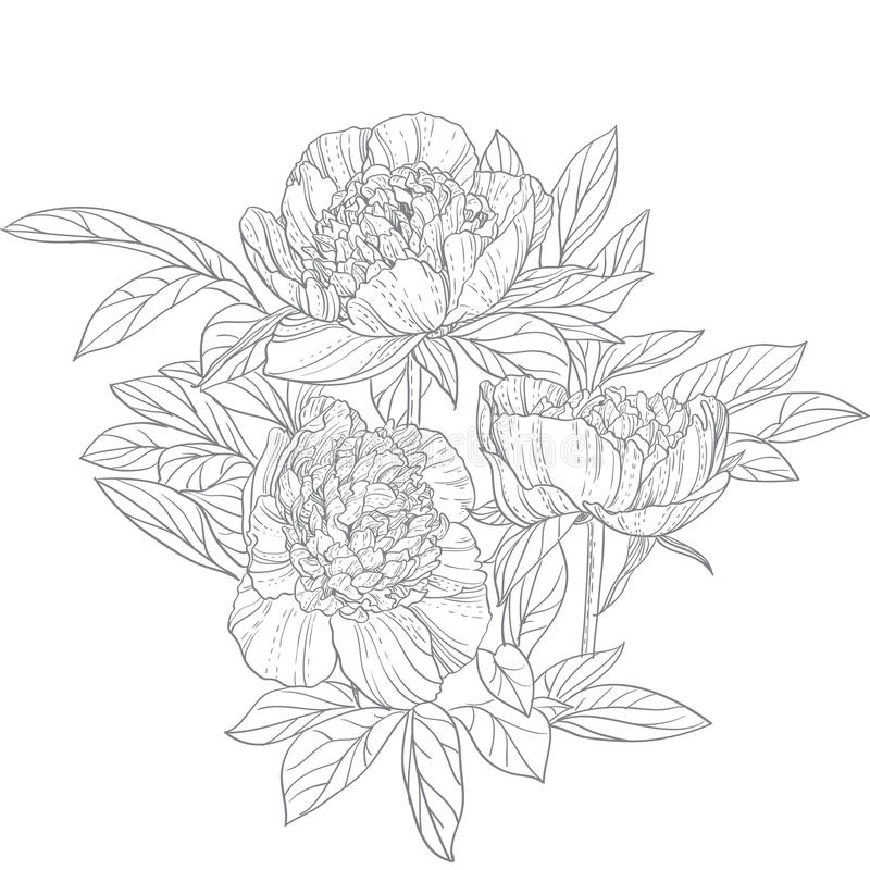 Peony Line Drawing Tattoo : Peonies line art stock vector illustration of