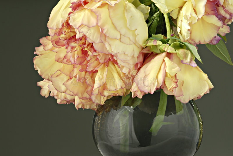 Peonies in Vase. Yellow peonies with pink edges in vase stock images