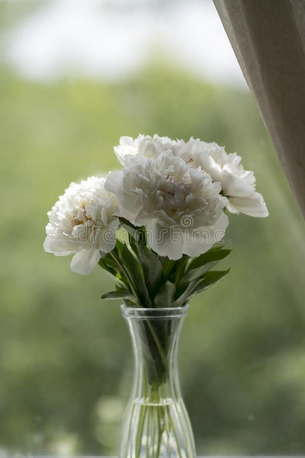 Bouquet Of Peonies Blooms Stock Image Image Of Green 24770119