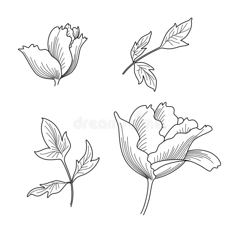 Download Peony. Royalty Free Stock Photography - Image: 19254817