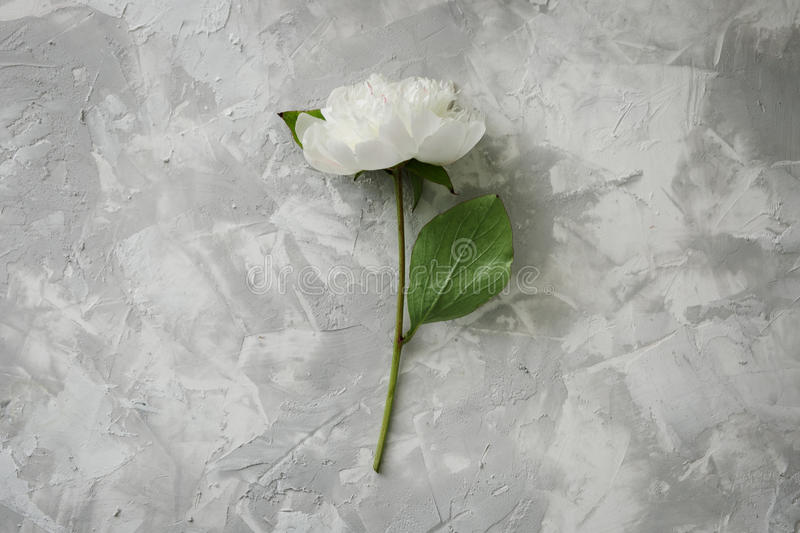 Peony on a background of marble, photographed in the daytime. royalty free stock image