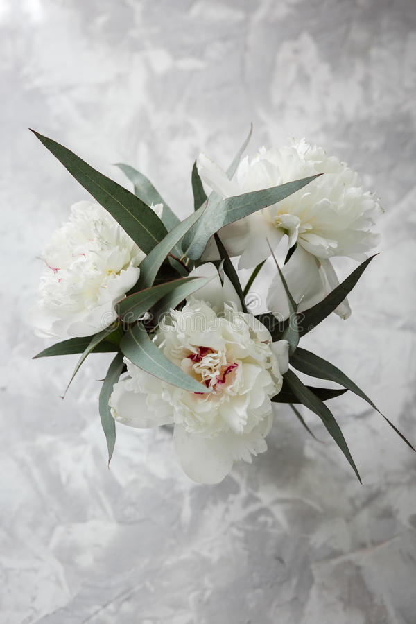 Peony on a background of marble, photographed in the daytime. stock photos