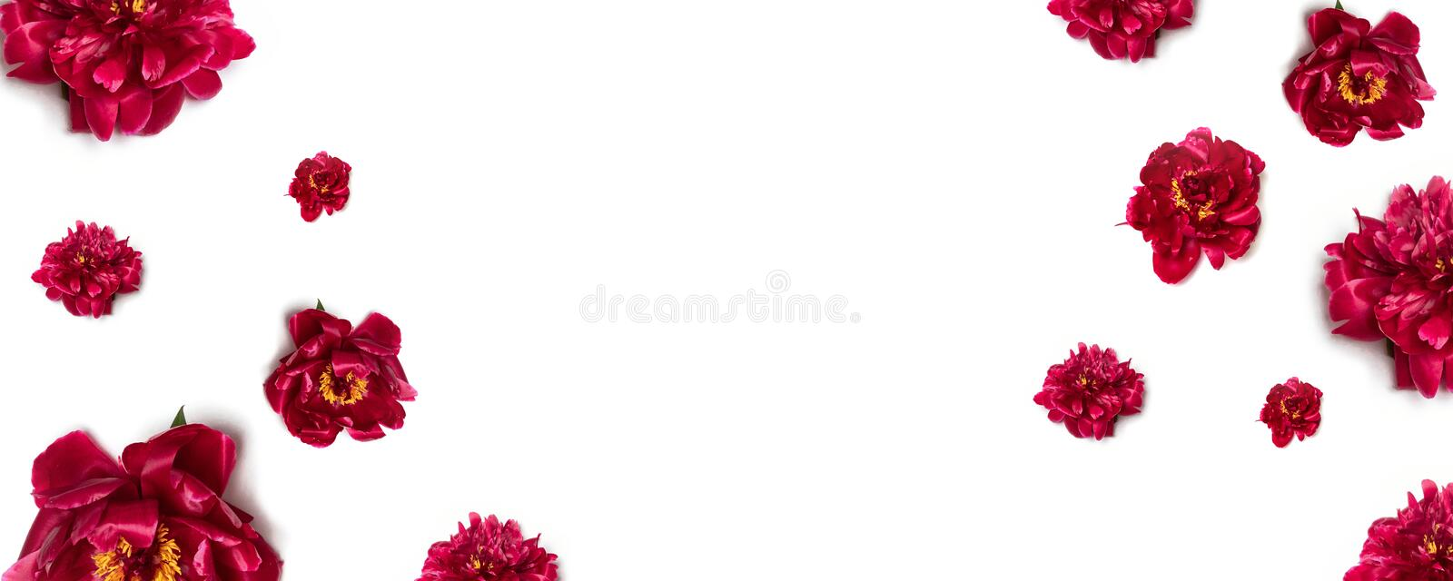 Peony Flower Arrangement. Floral pattern of red peony flowers on white background stock images