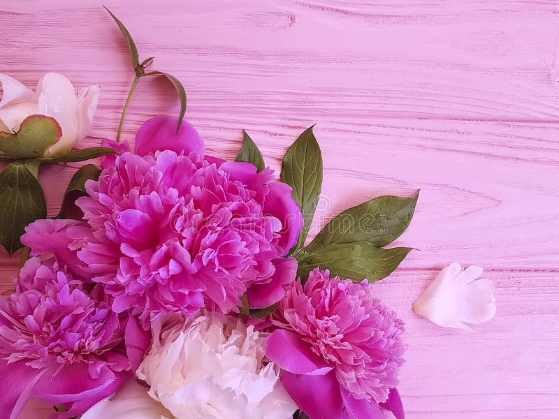 Peony flower beautiful romantic on wooden background frame birthday pattern. Peony flower on wooden background design frame pattern birthday beautiful romantic stock photography