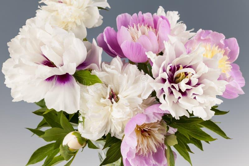 Peony flower bouquet stock image
