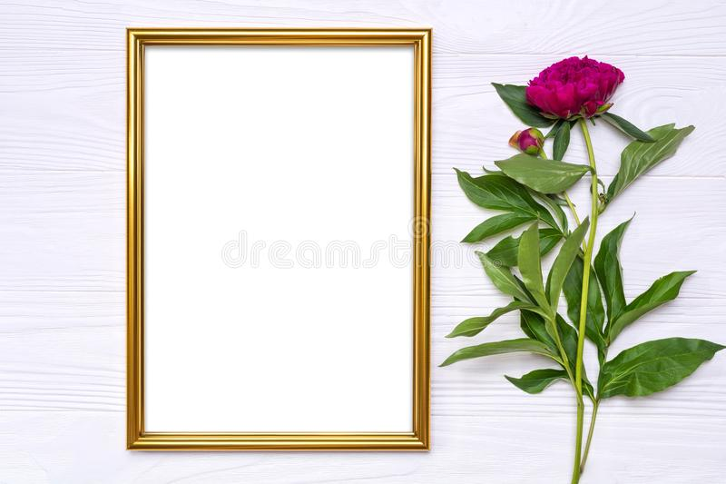Peony flower and a gold frame on a white wooden background royalty free stock photos