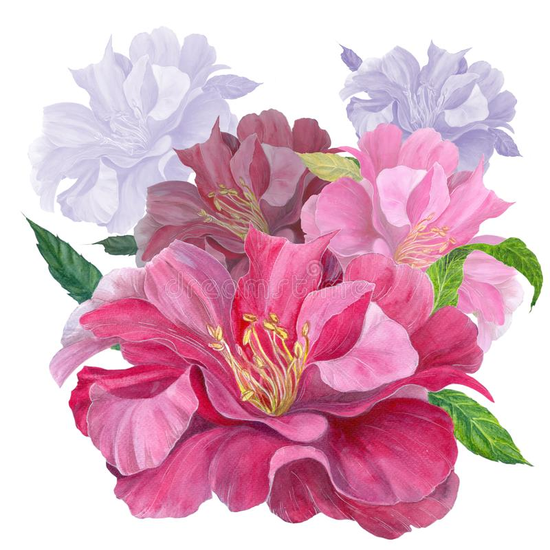 Peony flower on a white background. Pink flower. Watercolor. Collage of flowers and leaves. vector illustration