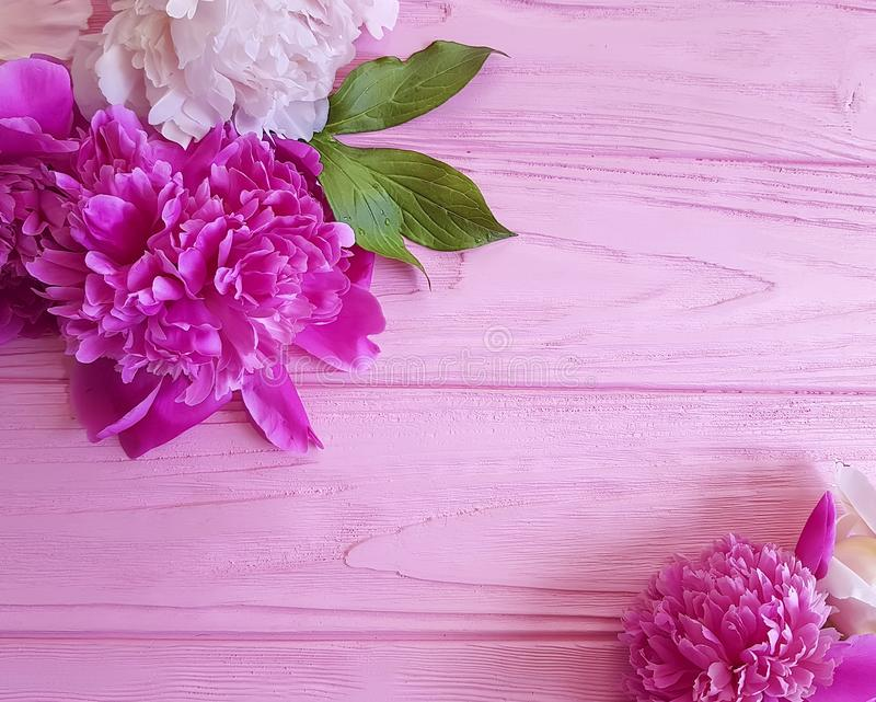 Peony flower on wooden background frame birthday pattern. Peony flower on wooden background design frame pattern birthday stock images