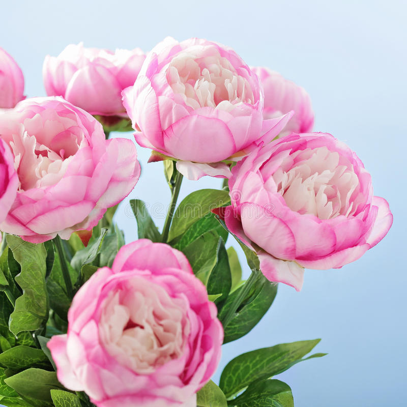 Free Peony Flowers Stock Photo - 37256160