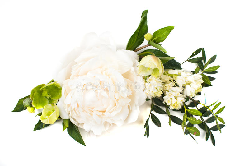 Peony flowers arrangement on white background isolated. Festive royalty free stock images
