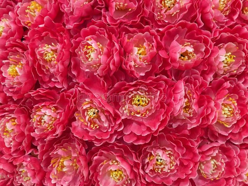 Peony Flowers Background royalty free stock image
