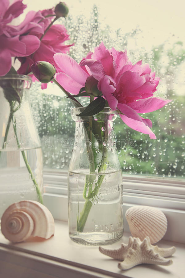 Peony flowers in milk bottles in the window stock photo