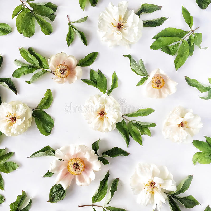Peony flowers pattern isolated on white background. Flat lay, top view stock photography