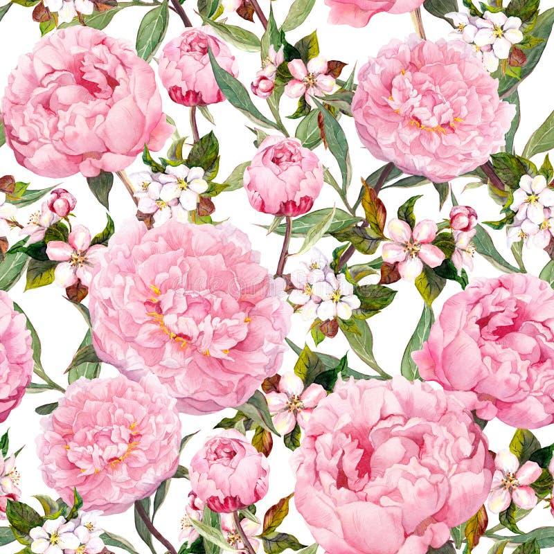 Peony flowers, sakura. Floral seamless background. Watercolor royalty free illustration