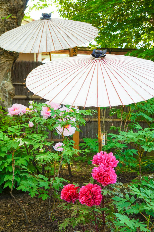 Peony garden royalty free stock image