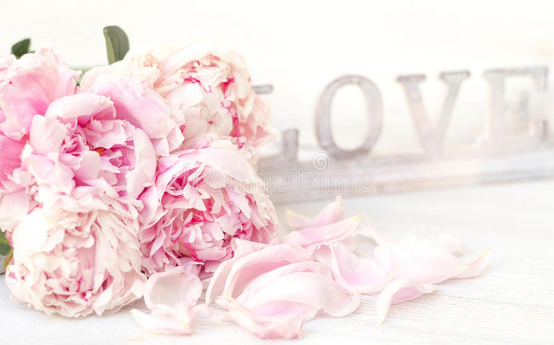 Peony and Love. Shabby chic background royalty free stock images