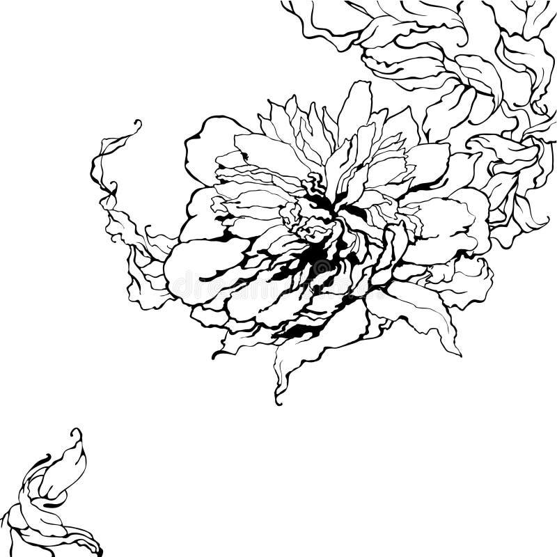 Peony, preto e branco ilustração royalty free