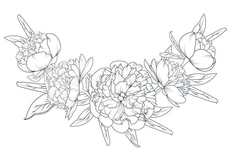 Peony rose laurel foliage garland black white royalty free illustration