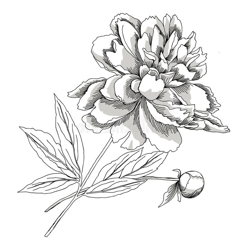 Peony.Sketch zwart-wit stock illustratie