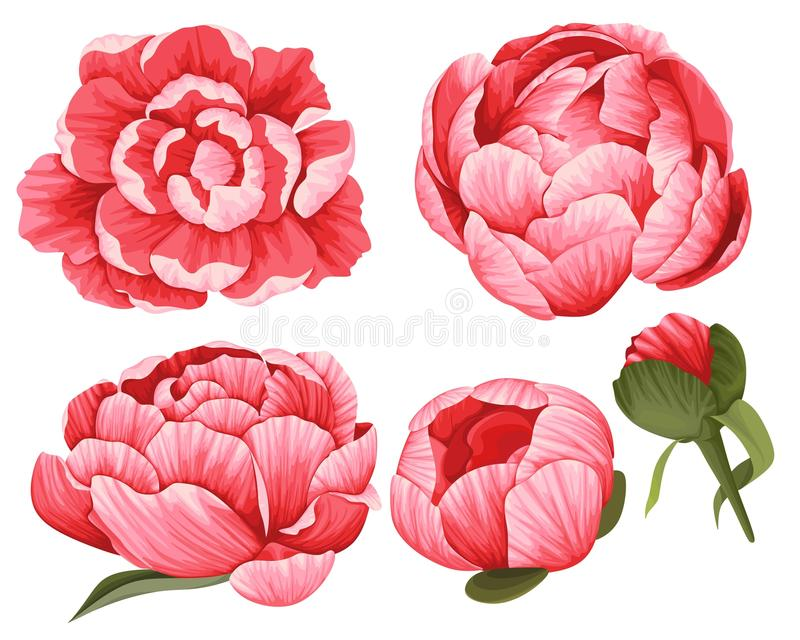 Peony Vector Clip Art Set of 5 Red Flowers image. Peony Vector Clip Art Set of 5 Red beautiful Flowers image stock illustration