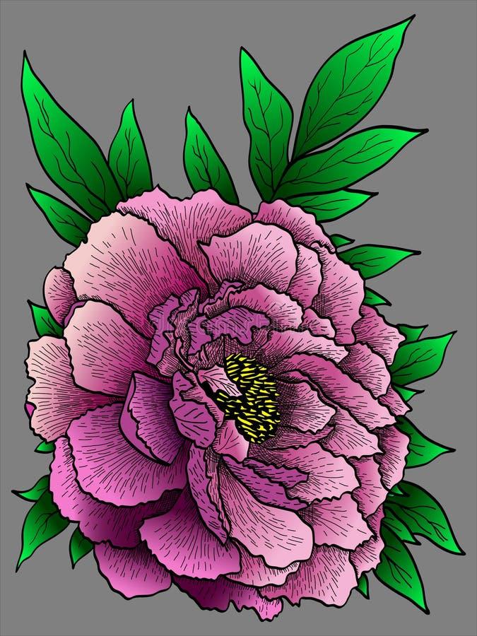 Peony vector flower stock photography