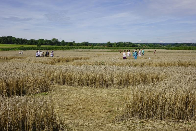 People admire a crop circle. In a corn field at Rasiting, Upper Bavaria, Bavaria, Germany, Europe royalty free stock image