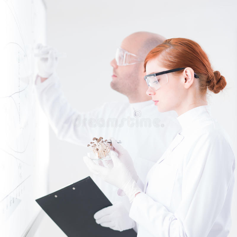 Download People analyzing in a lab stock photo. Image of medicine - 31258254