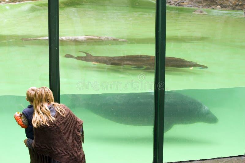 People At An Aquarium Stock Photography