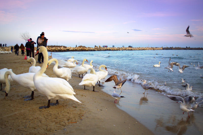 People and birds on beach stock images